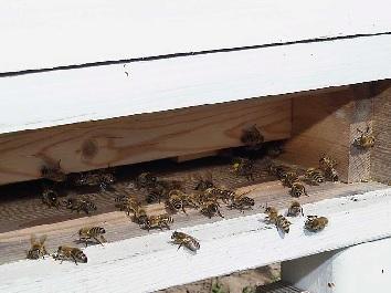 Manufaktur für Honig